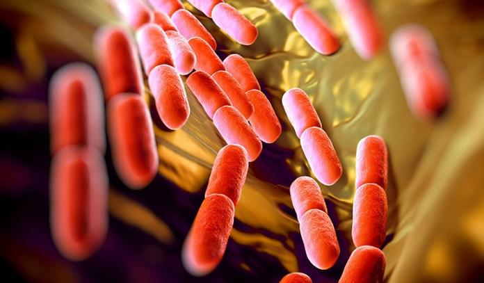 Lactobacillus is good bacteria