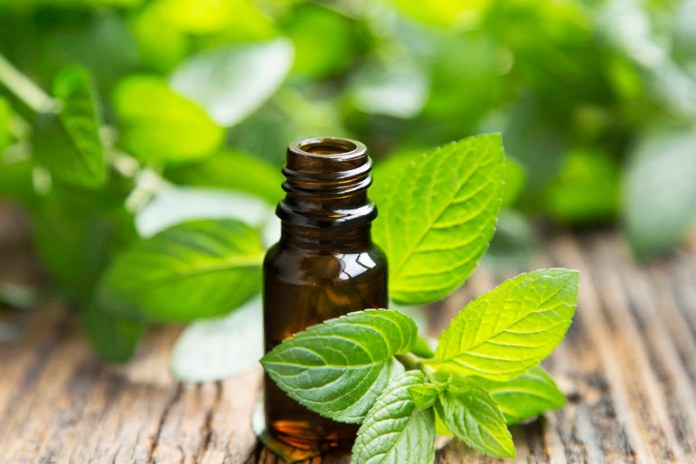 Peppermint helps reduce fatigue