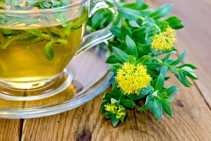 This herb keeps you active and reduces fatigue