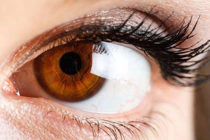 Avocado oil increases your eye health