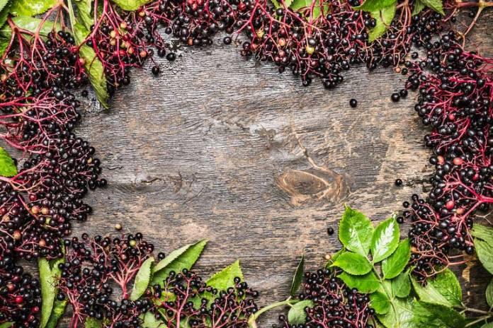 Elderberry helps to raise immunity