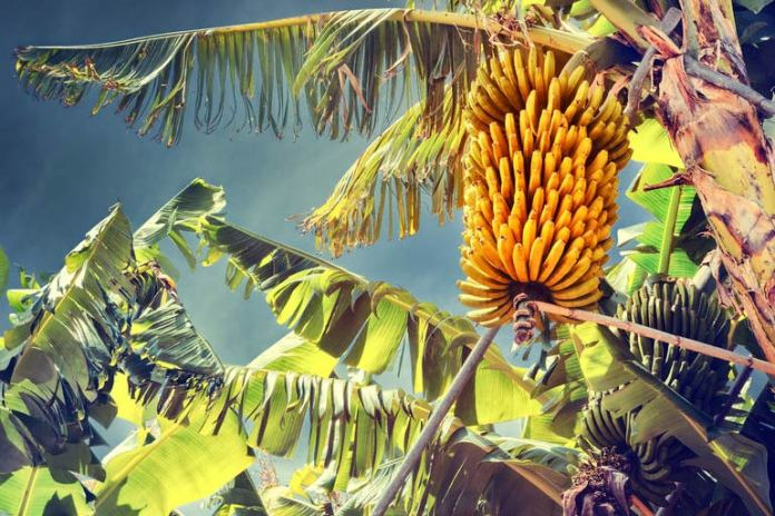 Potassium plays a crucial role in reducing hypertension
