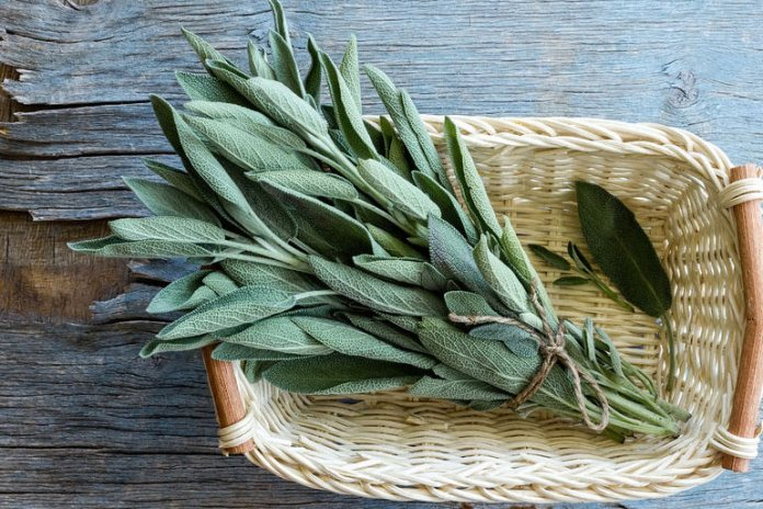 Sage has antibacterial properties that are good for oral and body odor.