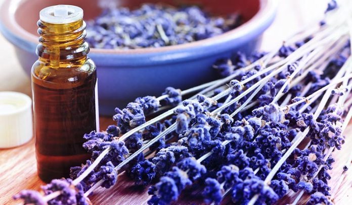 Lavender Can Treat Scrapes, Cuts And Burns