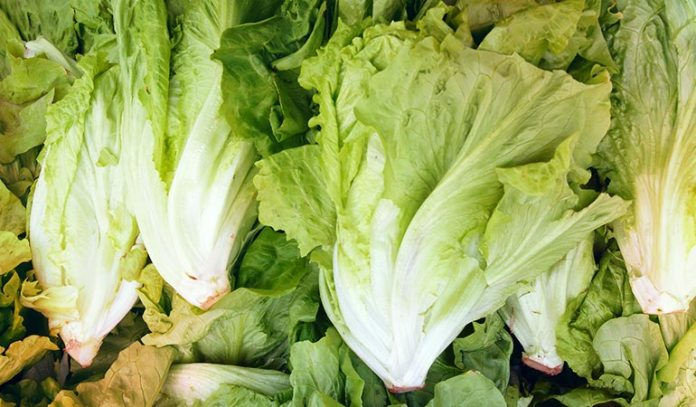 (Lettuce is very appetizing in nature