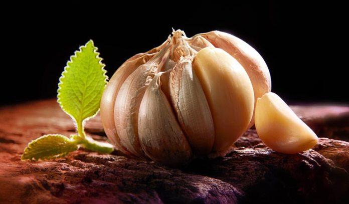 Garlic cloves must be taken fresh to fight bacterial and fungal infections