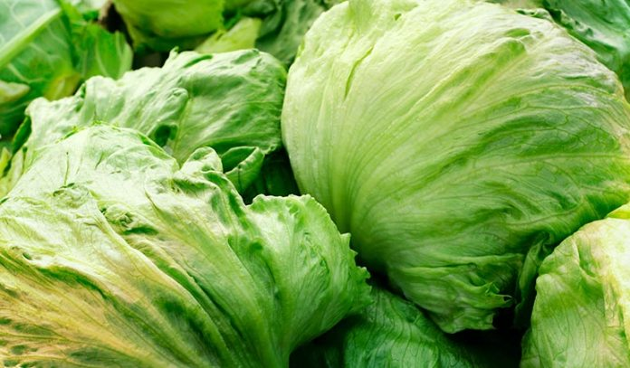 Lettuce has similar effects to opium