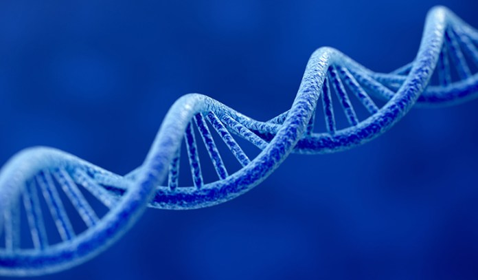 Increases DNA and RNA production