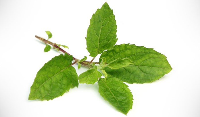 Holy basil can clear mucus and relieve a runny nose