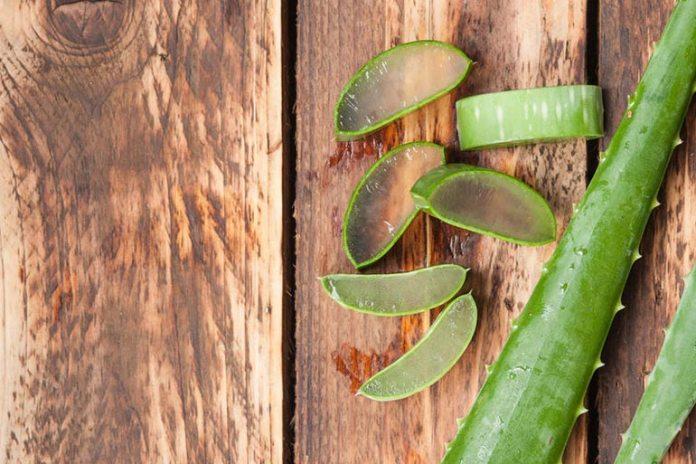 Aloe vera helps reduce burning sensations.
