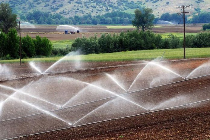 Pesticides sprayed onto plants are consumed by animals