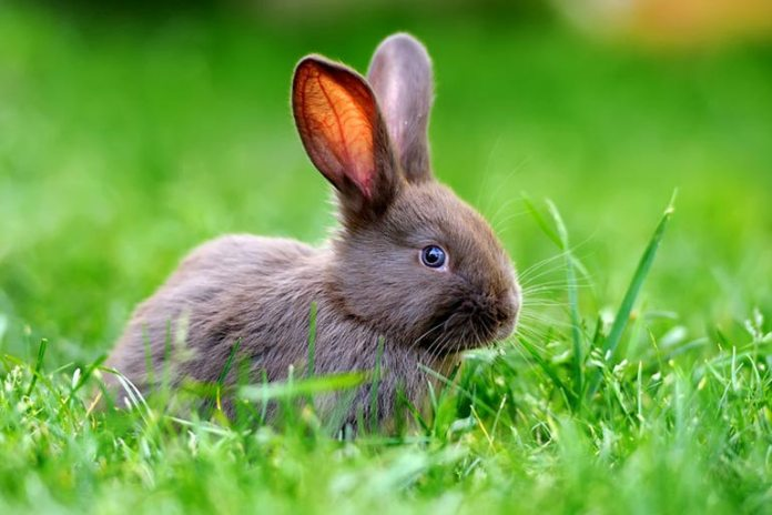 Sprinkle some baby powder on plants and vegetables to deter rabbits
