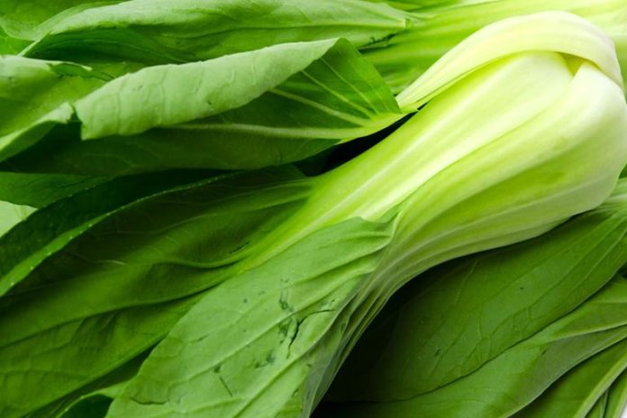 Besides calcium bok choy provides fiber and vitamins A and C