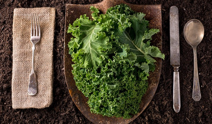 Kale helps in controlling diabetes and lowers the risk of cancer