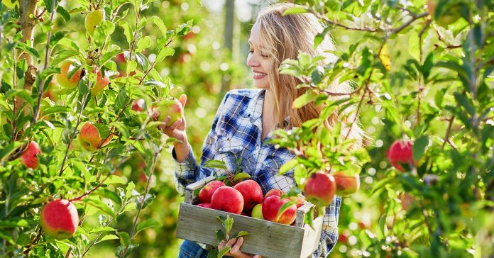 Apple is a wonder-fruit that offers a lot of benefits to your body.