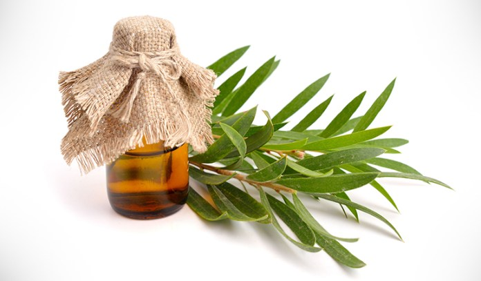 Unclog Your Pores With Tea Tree Oil