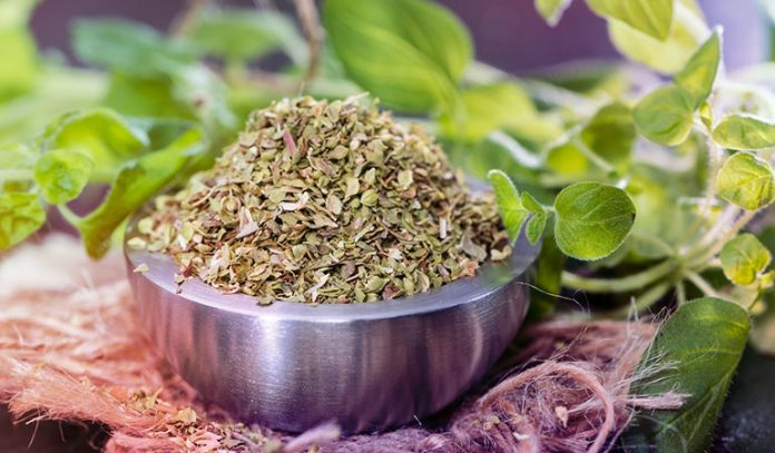 Oregano can protect your from food-borne viruses