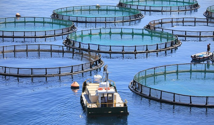 Farmed fish are brought up in cramped tanks and are fed unnatural diets, rendering them unsafe for consumption.