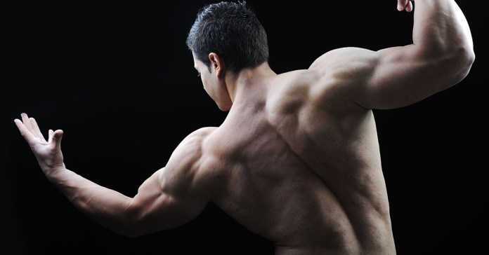 Several Factors Determine Muscle Gain