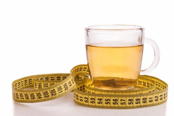 Green tea enhances thermogenesis