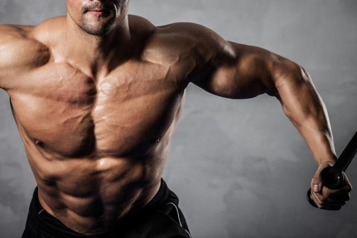 Muscle Fiber Distribution Plays A Vital Role In Muscle Gain