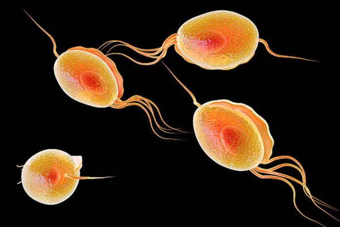 The organism trichomonas vaginalis causes trichomoniasis.