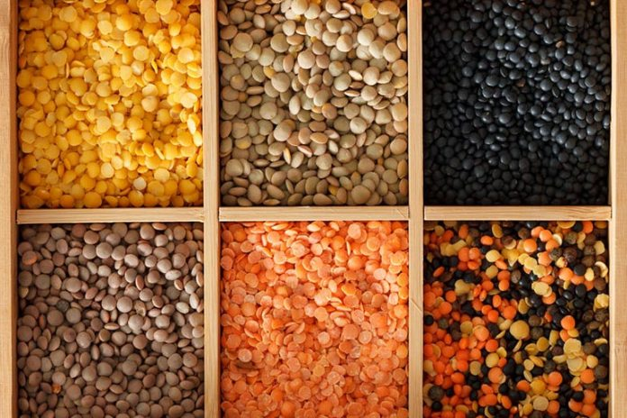 protein content in lentils