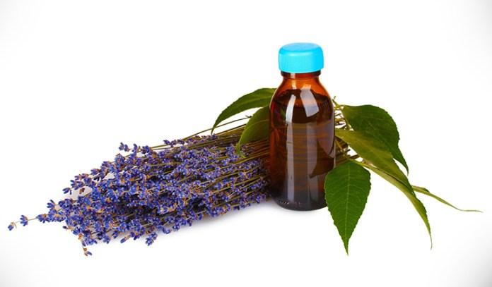 lavender essential oil for oily skin
