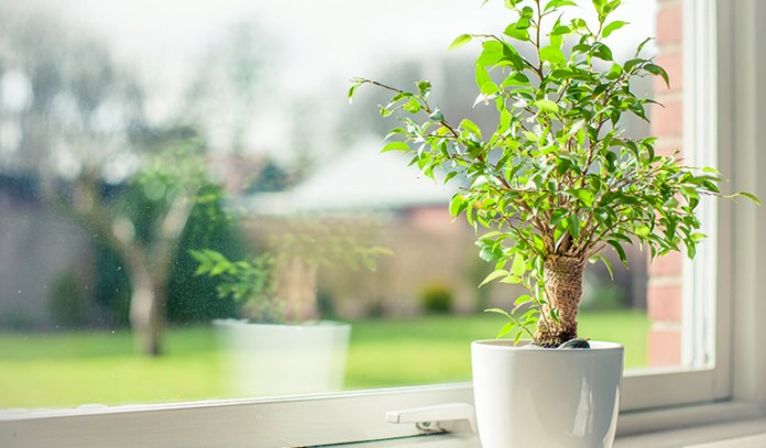 Plants are negatively affected by the particulate matter in pollution and smoke