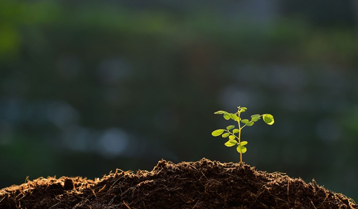 Pollution contains carbon dioxide that the plants need to survive