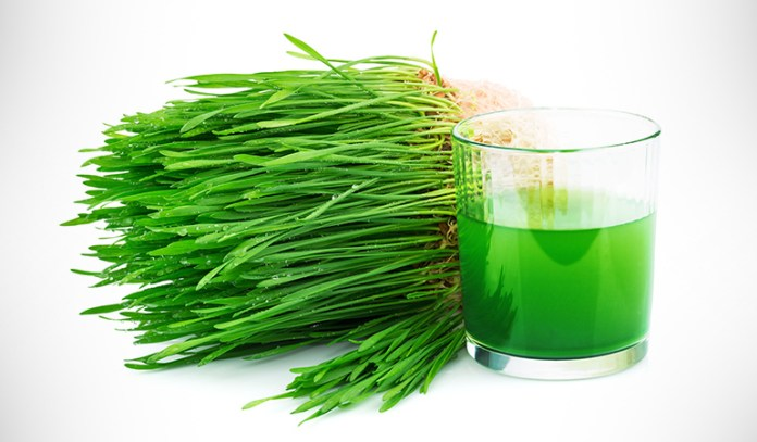 Wheatgrass juice has anti-inflammatory properties