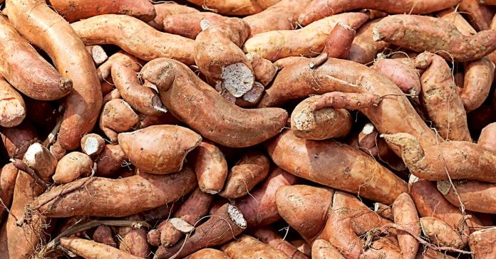 Here's the difference between sweet potatoes and yams