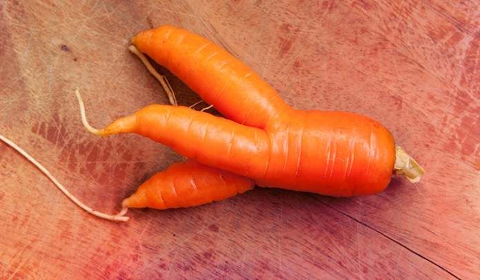 (Due to pebbles or imperfect soil, root vegetables might get deformed