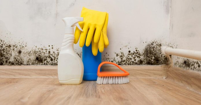 Natural ways to get rid of mold in your home