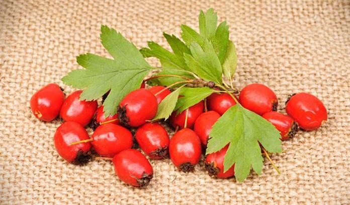 Hawthorn can treat high blood pressure