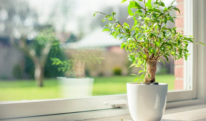 Keeping Plants Indoors Can Purify The Air Indoors