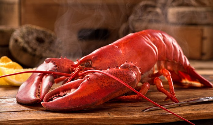 Lobsters may be picked up live from a tank and slaughtered immediately for consumption