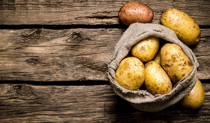 Eating genetically modified potatoes frequently causes serious digestive issues