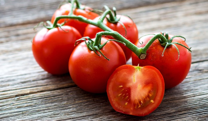 Regular intake of genetically modified tomatoes makes the human body resistant to antibiotics