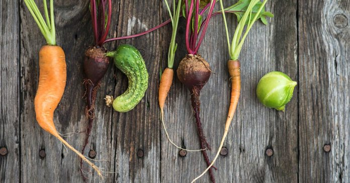 (Ugly produce are equally nutritious if not rotten and diseased