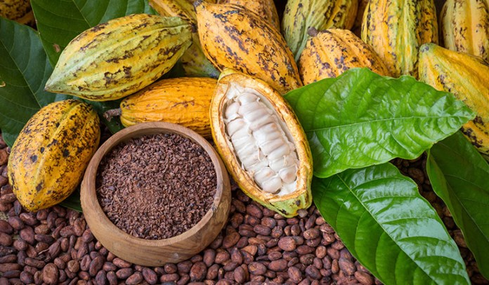 Cocoa powder is obtained after processing raw cacao seeds