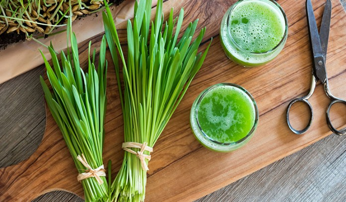 Researchers found that wheatgrass juice may cure ailments like thalassemia and ulcerative colitis.