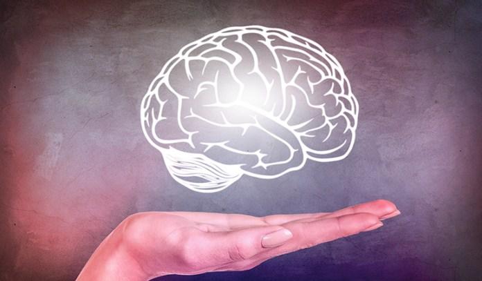 The fatty acids present in maca help support brain activity.