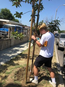 Calvin Foss (LMU '21) measuring the circumference of a street tree.