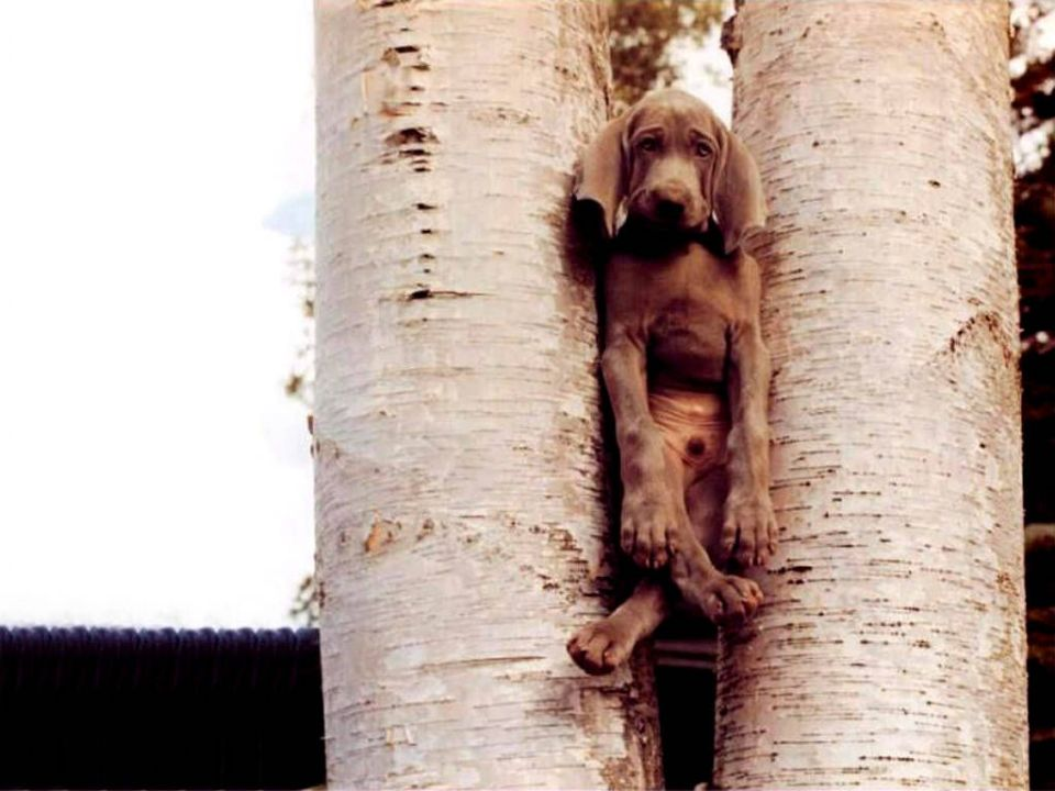 https://i1.wp.com/curezone.com/upload/Members/trapper/funny_dog_stuck_in_tree.jpg