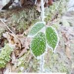 Mes 3 nouveaux écogestes-Oriculi, Lilo et Lundi vert