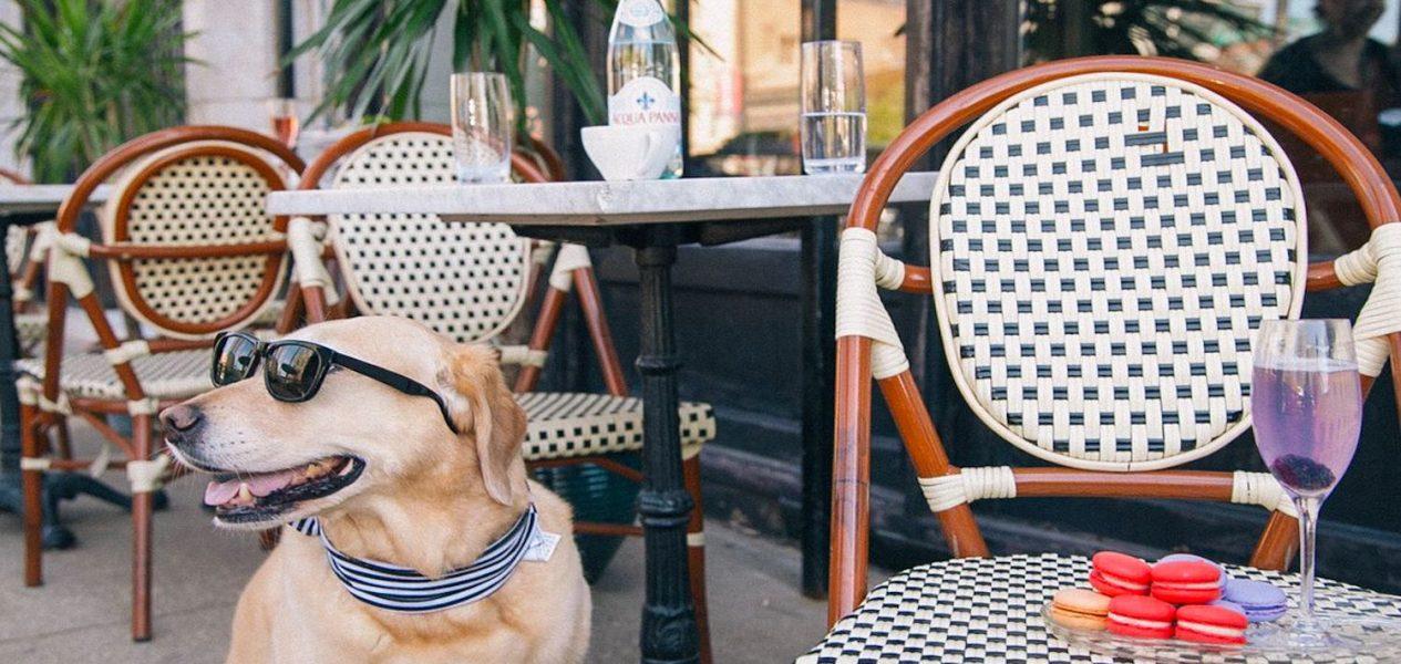 10 best pup friendly patios in calgary