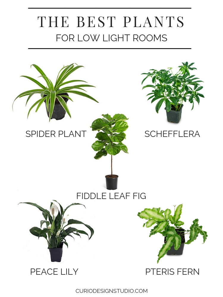 Flowerworks Collaboration Series The Best Plants For Low Light Rooms Curio Design Studio