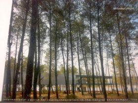 """Il bosco attorno a """"el Anillo"""""""