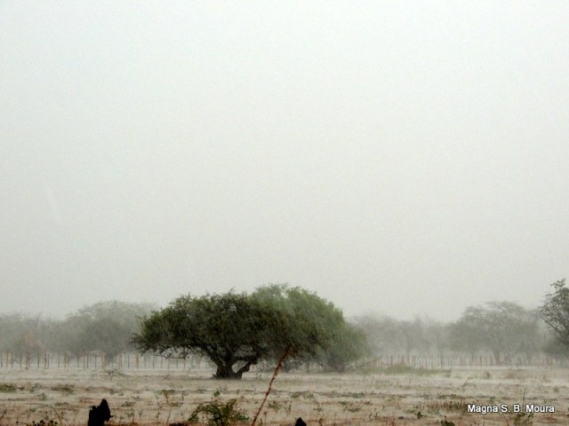 Resultado de imagem para chuvas em petrolina e juazeiro
